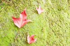 Autumn Leaf Fotografía de archivo