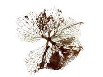 Autumn leaf. Texture, isolated on white background Royalty Free Stock Photos