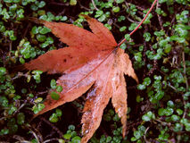 Autumn and a leaf Stock Photo