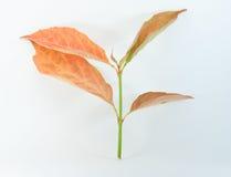 Autumn Leaf Fotos de archivo libres de regalías