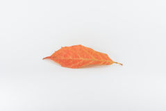 Autumn Leaf Foto de Stock