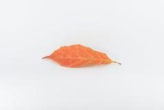 Autumn Leaf Foto de archivo