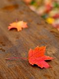 Autumn leaf. Autumn leaves fallen on a picnic table (E-1 + olympus zuiko 50mm F1.4 Royalty Free Stock Photos