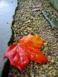 Autumn Leaf. Red autumn leaf stock photo