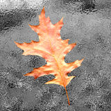 Autumn leaf. On frozen background stock images