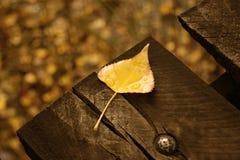 Free Autumn Leaf Stock Photos - 48010133
