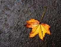 Autumn leaf. A yellow, dry autumn leaf on dark grey background stock image