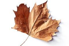 Free Autumn Leaf Stock Images - 4928044