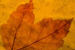 Autumn leaf. With orange background Stock Photography
