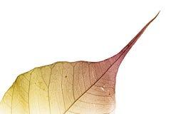 autumn leaf Στοκ Φωτογραφία
