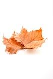 Autumn leaf. On the white background Stock Image
