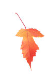 Autumn leaf. Autumn leaf isolated on white Royalty Free Stock Photos