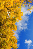 Autumn leaf. Beautiful autum leaves against sky Royalty Free Stock Images