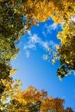 Autumn leaf. Beautiful autum leaves against sky Royalty Free Stock Image
