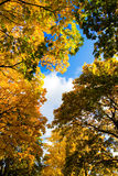 Autumn leaf. Beautiful autum leaves against sky Royalty Free Stock Photography