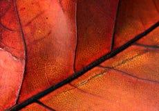 Autumn leaf. A close-up of an autumn royalty free stock photos