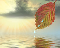 Autumn leaf above water in beams Royalty Free Stock Image