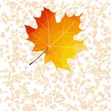 Autumn leaf abstract backgrounds. plus EPS10 Royalty Free Stock Photography