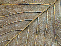 Autumn leaf abstract texture. Royalty Free Stock Images