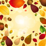 Autumn leaf and acorn background Stock Photography