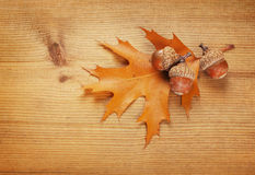 Autumn leaf and acorns Stock Image