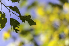 An autumn leaf against beautiful bokeh background Stock Images