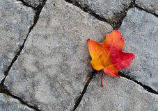 Autumn leaf against stone texture Royalty Free Stock Images