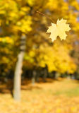Autumn leaf in the air Royalty Free Stock Photo