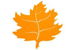 Autumn Leaf amarillo Imagen de archivo libre de regalías