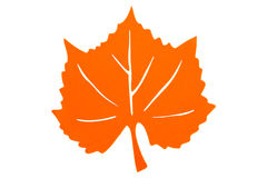 Autumn Leaf arancio Immagine Stock Libera da Diritti