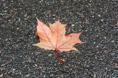 Autumn leaf on the asphalt Stock Photos