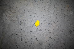 Autumn leaf on asphalt Stock Images