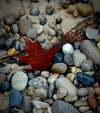 Autumn Leaf auf dem Strand Stockfotografie