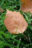 Autumn leaf. Autumn is coming soon stock photography