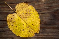 Autumn yellow leaf on a wooden deck stock image
