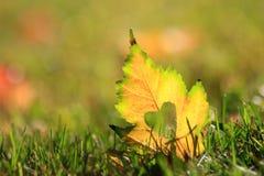 Autumn Leaf avec amour dans l'herbe Images stock