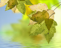 Autumn leaf in the back light. Quiet scene with autumn leaf and water Stock Photography