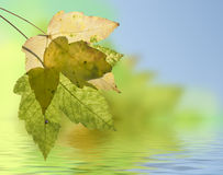Autumn leaf in the back light. Quiet scene with autumn leaf and water Royalty Free Stock Photos