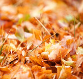 Autumn leaf background Royalty Free Stock Photos