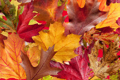 Autumn Leaf Background Stock Photo