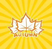 Autumn leaf background Stock Images