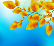Autumn leaf background. Yellow leaves with blue clear sky. Nature autumn vector background stock illustration