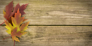 Autumn Leaf Background Royalty-vrije Stock Afbeeldingen