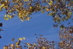 Autumn leaf background. Close up of backlit autumn leaf background Stock Photography