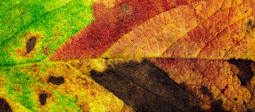 Autumn leaf background. Royalty Free Stock Images