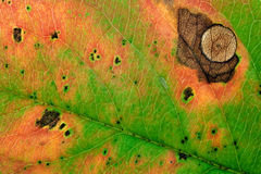 Autumn leaf background. Royalty Free Stock Image