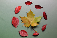 Autumn leaf background on a green  table Royalty Free Stock Photography