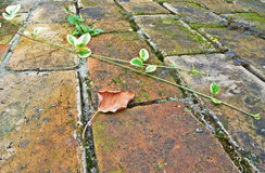 Autumn leaf. On background made of bricks Royalty Free Stock Photo