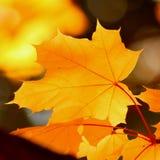 Autumn leaf background - Stock Photos. Orange Autumn leaf background - bokeh.  Golden Brown foliage Stock Photo