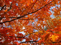 Autumn leaf background - Stock Photos Stock Image